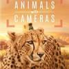 假如动物会摄影 Animals with Cameras (2018)