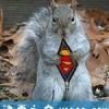 超级松鼠 Natural World: The Super Squirrels (2018)