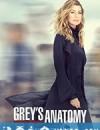 实习医生格蕾 第十六季 Grey's Anatomy Season 16 (2019)