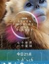 七个世界,一个星球 Seven Worlds, One Planet (2019)